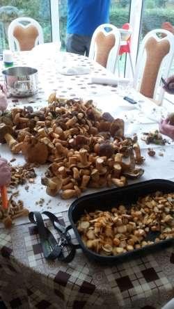 Kundenfoto: gesammelte Pilze in der Umgebung im Oktober