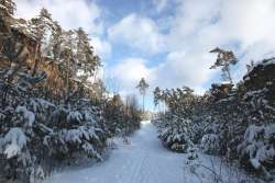 Loipe im Winter 800 m ab Haus