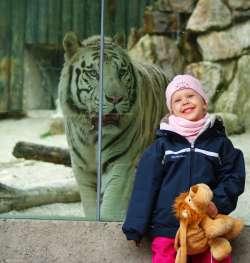Tierpark in Liberec - weiße Tiger